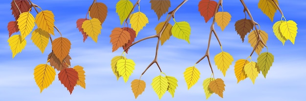Bandera de otoño brillante, rama de abedul otoñal sobre fondo de cielo, ilustración vectorial