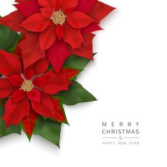 Banner de feliz navidad y próspero año nuevo con flores rojas de navidad aisladas sobre fondo blanco.