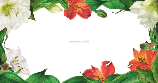 Banner floral con flores de lirio blanco y rojo