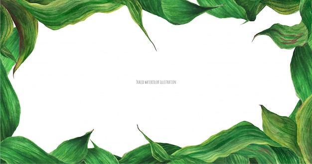 Banner floral con hojas de lirio verde