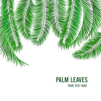 Banner de fondo de palmera tropical