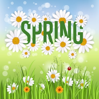 Banner de primavera con manzanilla en flor