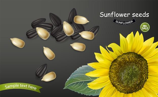 Banner de semillas de girasol