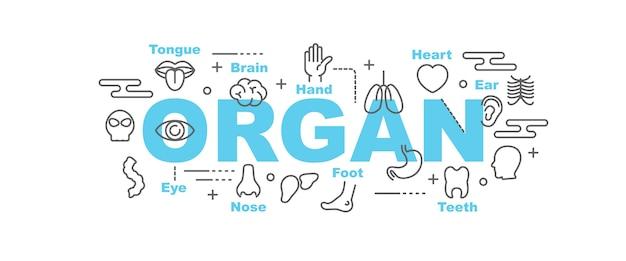 Banner de vector de órgano