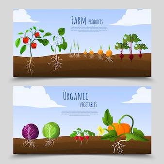Banners horizontales de alimentos saludables