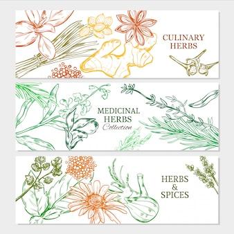 Banners horizontales de plantas naturales saludables