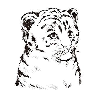 Bebé de león tigre, retrato de dibujo aislado de animales exóticos. ilustración dibujada a mano.