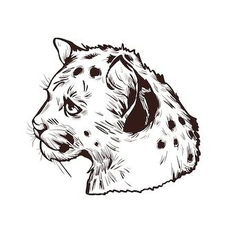 Bebé puma, retrato de dibujo aislado de animales exóticos. ilustración dibujada a mano.