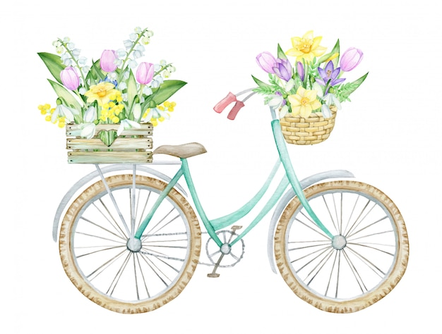Bicicleta, caja de madera con flores de primavera, mimbre, canasta con flores y hojas. primavera, concepto sobre un fondo aislado, dibujo acuarela.
