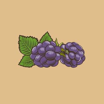 Blackberry en estilo vintage. ilustración vectorial de color
