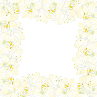 Blancanieves agapanthus border.