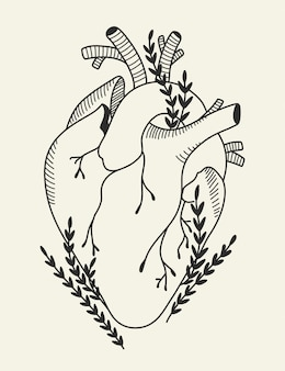 Blooming corazón humano anatómico