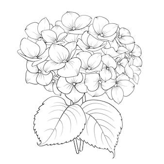 Blooming flor hortensia.