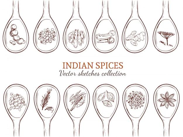 Boceto conjunto de especias indias orgánicas