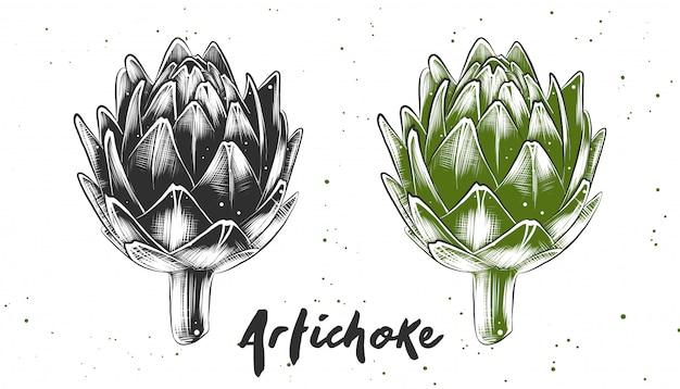 Boceto dibujado a mano de alcachofa