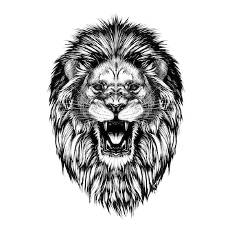 Boceto dibujado mano de cabeza de león en negro aislado