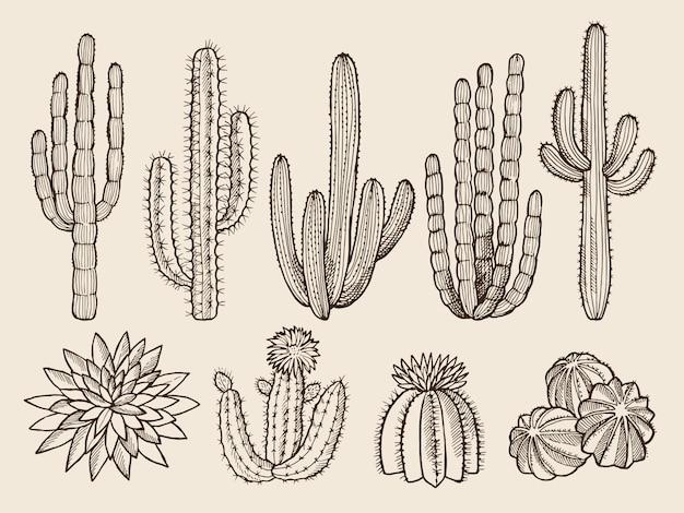 Boceto dibujado a mano de cactus y diversas plantas silvestres.