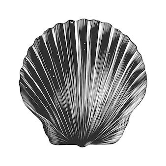 Boceto dibujado mano de concha de mar en monocromo