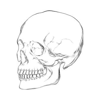Boceto dibujado mano del cráneo humano
