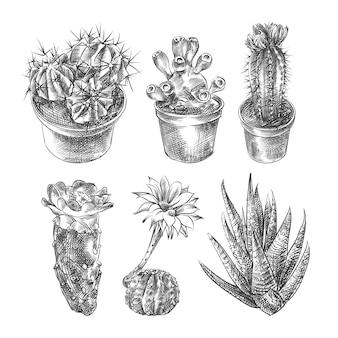 Boceto dibujado a mano de varios tipos de cactus (cactus). el conjunto incluye cactus de barril dorado, cereus espiral, cactus de erizo de mar, suculentas, cactus de calico, mazorca de carmín, cactus de floración.