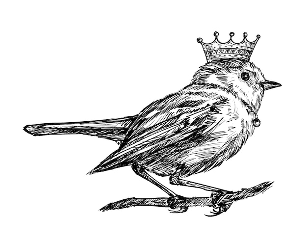 Boceto de dibujo de mano de pájaro corona