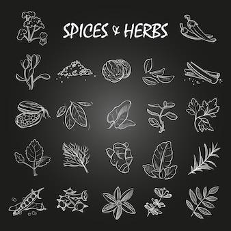 Boceto de especias y colección de hierbas en pizarra.