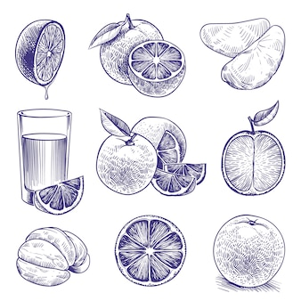 Boceto naranja. dibujo grabado de naranjas, cítricos botánicos, flores y hojas. embalaje de etiqueta de jugo tropical. conjunto de doodle de vector