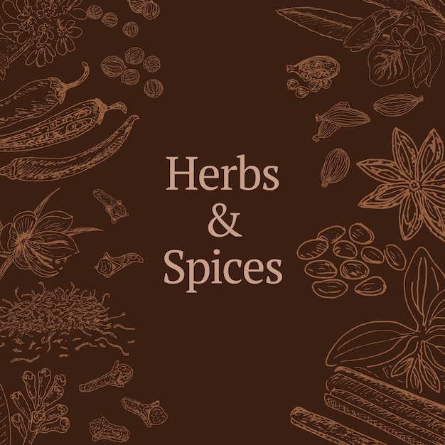 Boceto de plantilla de hierbas y especias con canela, cilantro, cardamomo, ají, azafrán, anís estrellado, clavo de amapola