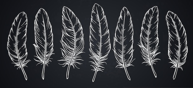 Boceto de plumas en la pizarra.