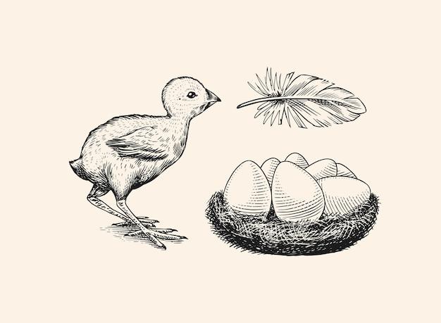 Boceto vintage dibujado a mano grabado