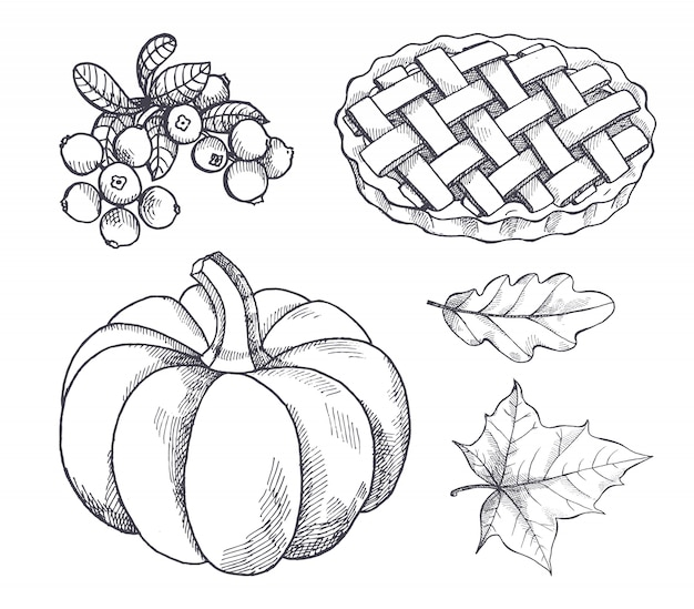 Bocetos de calabaza y pastel de arándanos al horno