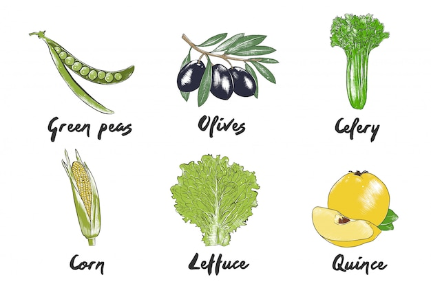Bocetos coloridos vegetales dibujados a mano