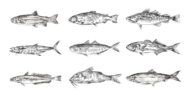 Bocetos dibujados a mano de peces, ilustración