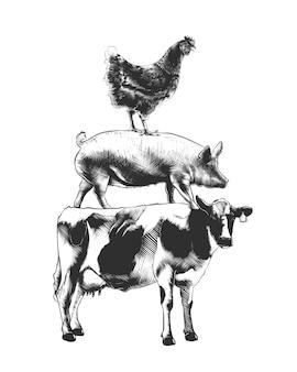 Bocetos dibujados a mano de vaca, cerdo y gallina.