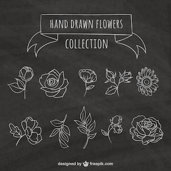 Bocetos variedad de flores en el estilo de la pizarra