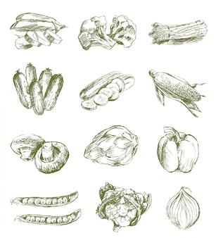 Bocetos de verduras