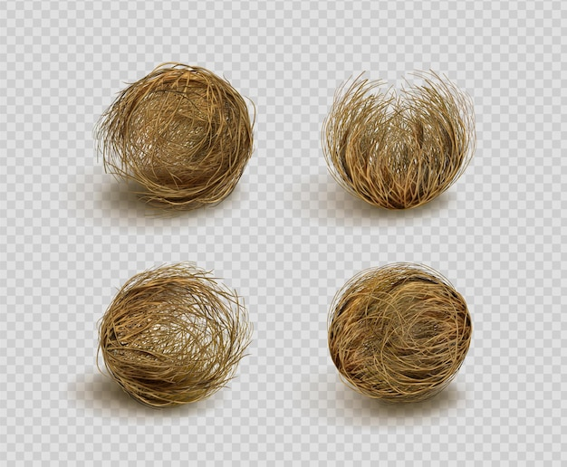 Bola de hierba seca tumbleweed aislada en transparente