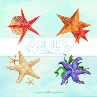 Bonitas estrellas de mar de acuarela