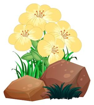 Bonitas flores y rocas sobre fondo blanco.