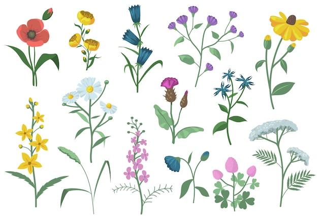 Bonito conjunto plano de flores de campo