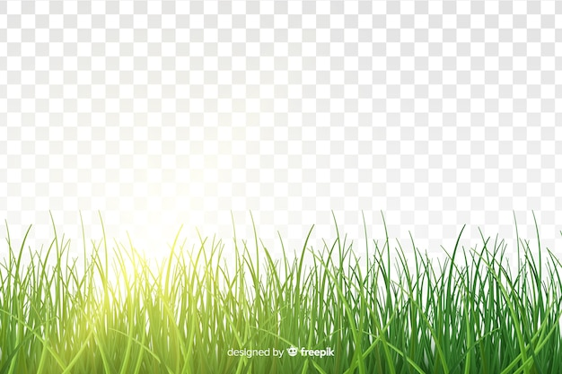 Borde hierba verde diseño realista