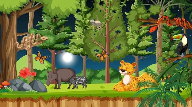 Bosque en escena nocturna con diferentes animales salvajes.