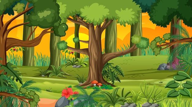 Bosque en la escena del paisaje al atardecer