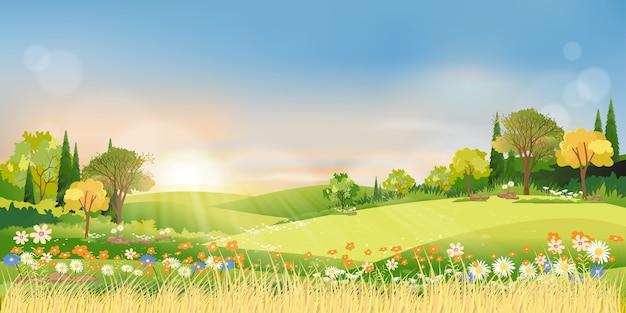 Bosque de las maravillas del paisaje otoñal con tierra de pasto, mediados de otoño natural en follaje naranja, temporada de otoño con hermosa vista panorámica con puesta de sol detrás de la montaña y hojas de arces cayendo