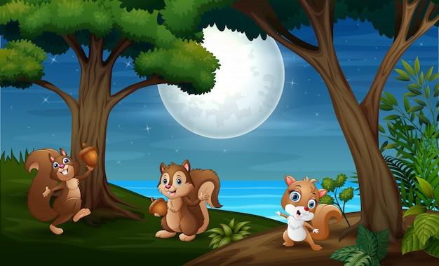 Bosque nocturno con tres ardillas