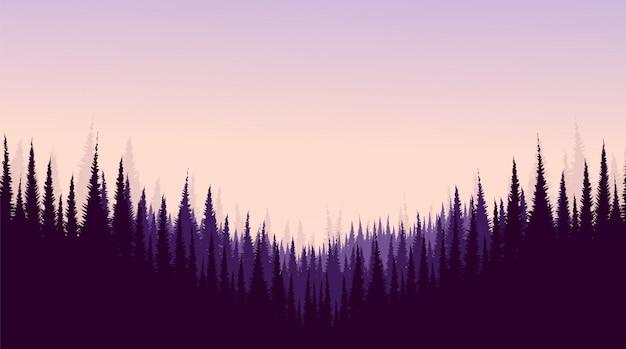Bosque de pinos, fondo de paisaje, sol y amanecer.