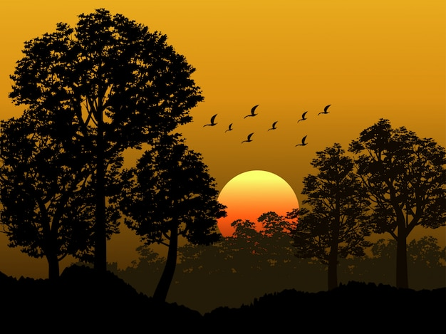 Bosque tropical en puesta de sol