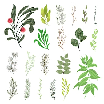 El bosque verde deja el follaje natural del conjunto de elementos del vector del verdor tropical de las ramas de las hierbas. ilustración botánica decorativa del diseño del vector