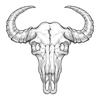 Bosquejo de calavera de búfalo