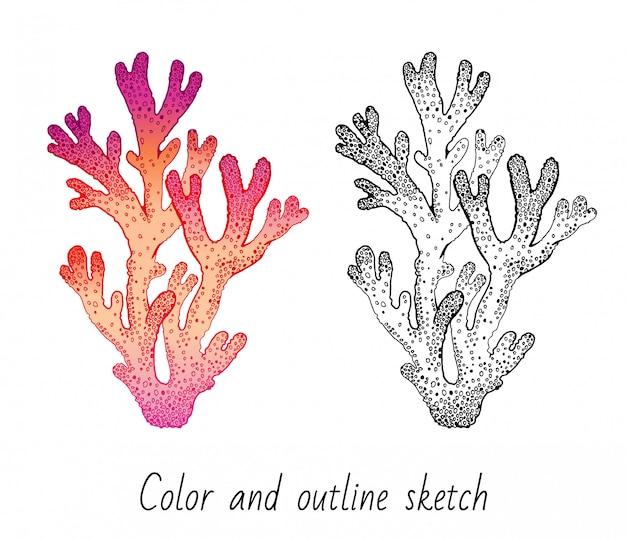 Bosquejo de color y contorno conjunto de arrecifes de coral